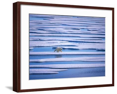 Polar Bear on Pack Ice-Hans Strand-Framed Art Print