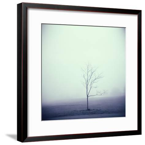 Tree Portrait, Discovery Park-Kevin Cruff-Framed Art Print