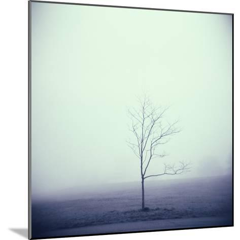Tree Portrait, Discovery Park-Kevin Cruff-Mounted Photographic Print