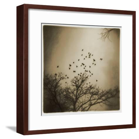 Birds and Trees, Discovery Park-Kevin Cruff-Framed Art Print