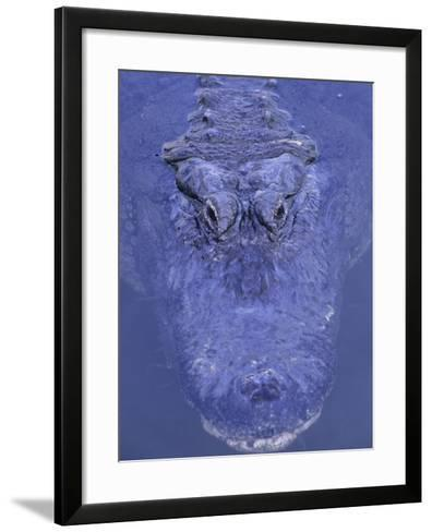 American Alligator in Water-Daniel Cox-Framed Art Print