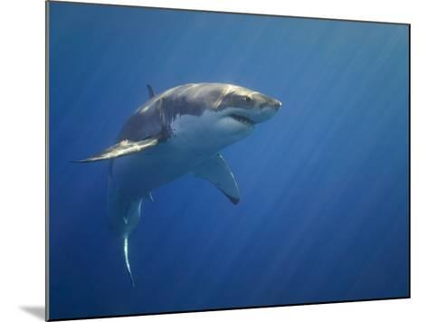 Shark in Open Water-Tim Davis-Mounted Photographic Print