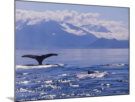 Tail of a Humpback Whale in Frederick Sound--Mounted Photographic Print