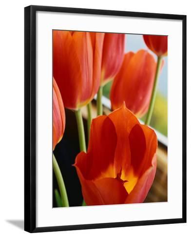 Red Tulips--Framed Art Print