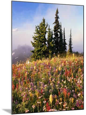 Evergreens and Blooming Wildflowers-Craig Tuttle-Mounted Photographic Print