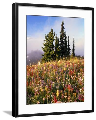 Evergreens and Blooming Wildflowers-Craig Tuttle-Framed Art Print