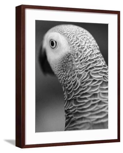Back of Parrot's Head-Henry Horenstein-Framed Art Print