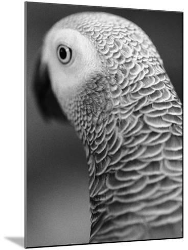Back of Parrot's Head-Henry Horenstein-Mounted Photographic Print