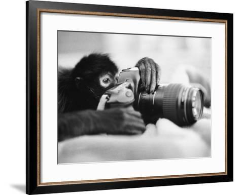 Monkey Holding Camera-Henry Horenstein-Framed Art Print