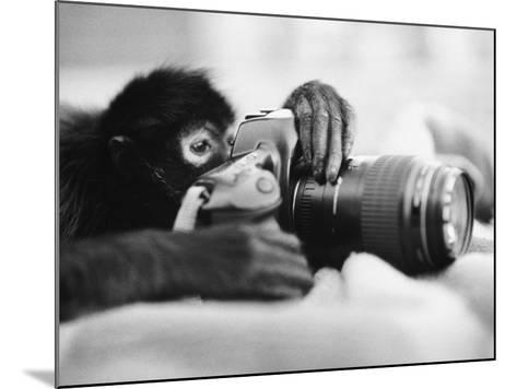 Monkey Holding Camera-Henry Horenstein-Mounted Photographic Print