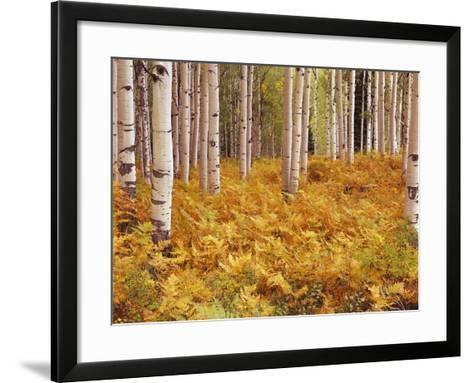 Aspen Forest in Golden Colored Ferns-William Manning-Framed Art Print