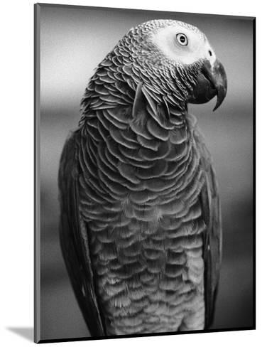 Parrot Turning Head-Henry Horenstein-Mounted Photographic Print