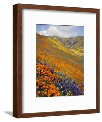 Hillside Wildflowers in Bloom-Craig Tuttle-Framed Art Print