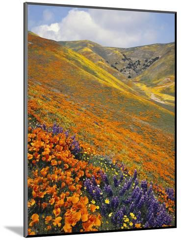 Hillside Wildflowers in Bloom-Craig Tuttle-Mounted Photographic Print