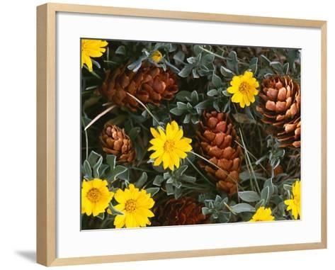 Arrangement of Flowers and Pine Cones-William Manning-Framed Art Print