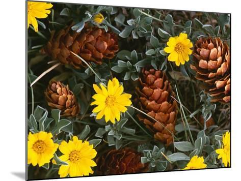 Arrangement of Flowers and Pine Cones-William Manning-Mounted Photographic Print