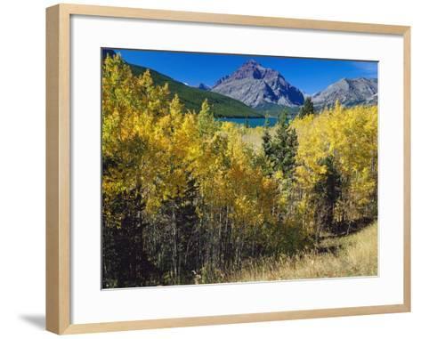 Autumn Trees in Glacier National Park-Craig Tuttle-Framed Art Print