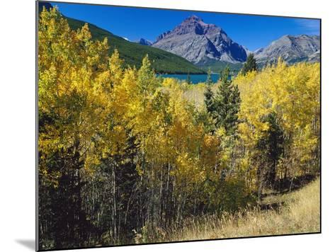 Autumn Trees in Glacier National Park-Craig Tuttle-Mounted Photographic Print