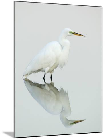 Great Egret Reflected-Arthur Morris-Mounted Photographic Print
