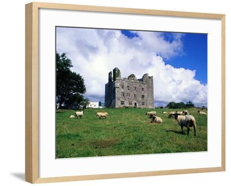 Sheep Grazing near Leamaneagh Castle-Richard Cummins-Framed Art Print