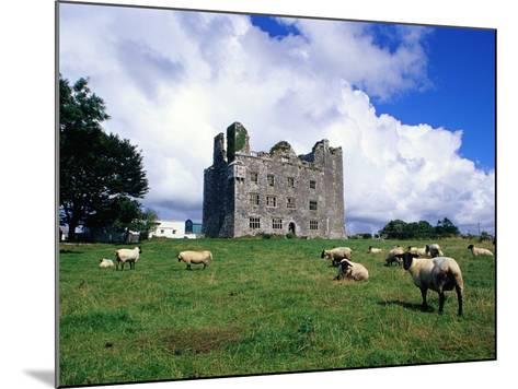 Sheep Grazing near Leamaneagh Castle-Richard Cummins-Mounted Photographic Print
