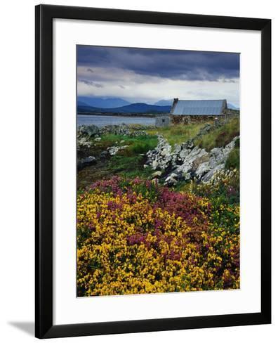 Flowers Along Carna Bay-Richard Cummins-Framed Art Print