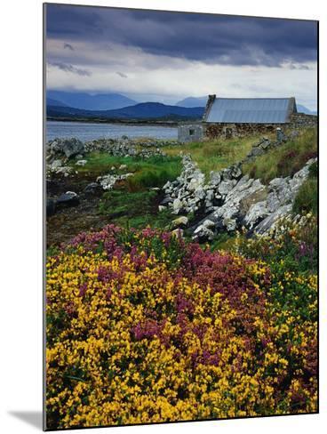 Flowers Along Carna Bay-Richard Cummins-Mounted Photographic Print