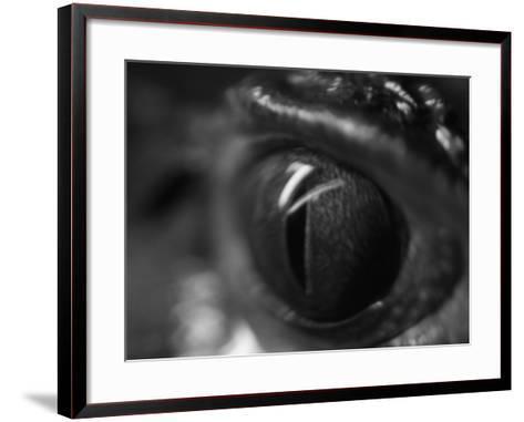 Reptile Eye-Henry Horenstein-Framed Art Print