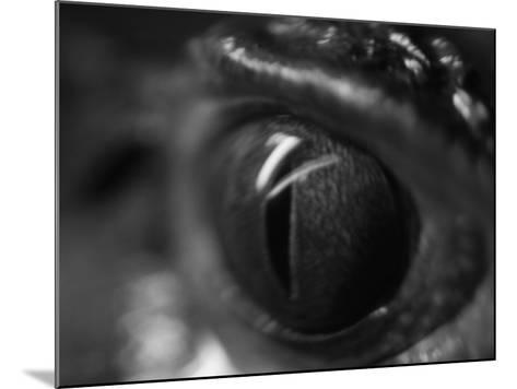 Reptile Eye-Henry Horenstein-Mounted Photographic Print