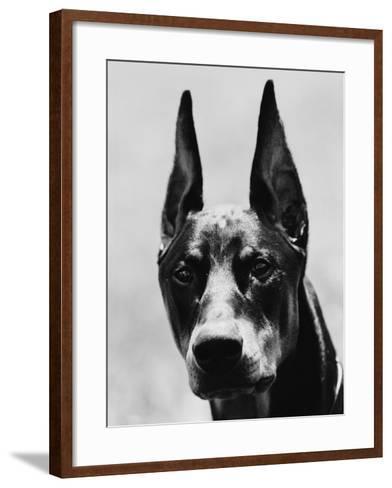 Head of Doberman Pinscher-Henry Horenstein-Framed Art Print