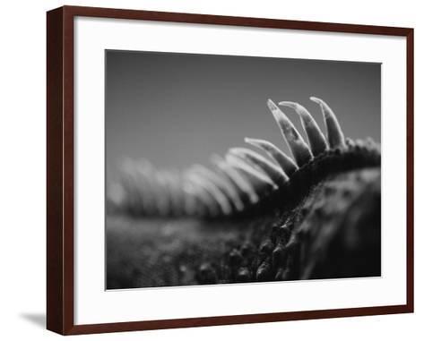 Back of an Iguana-Henry Horenstein-Framed Art Print