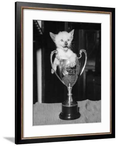 Siamese Kitten in a Trophy Cup--Framed Art Print