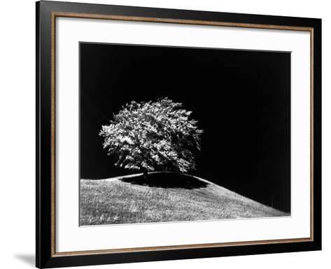 Lone Tree in Sunlight--Framed Art Print