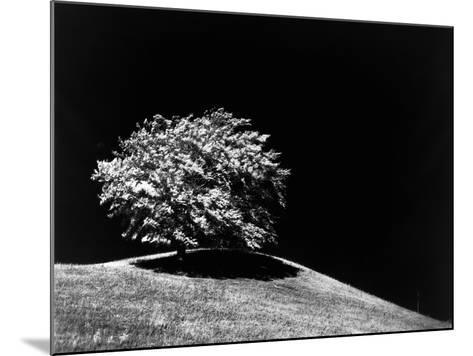 Lone Tree in Sunlight--Mounted Photographic Print