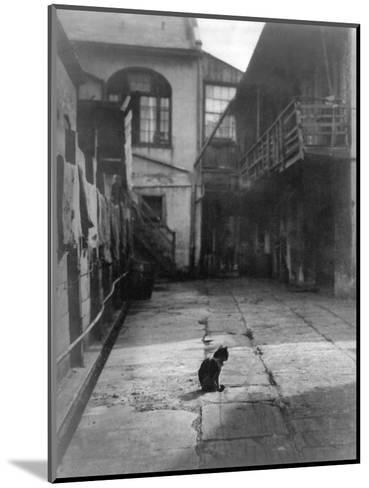 A Cat in a New Orleans Courtyard--Mounted Photographic Print