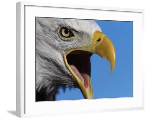 Bald Eagle Calling-W^ Perry Conway-Framed Art Print