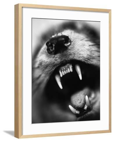 Snarling Dog-Henry Horenstein-Framed Art Print