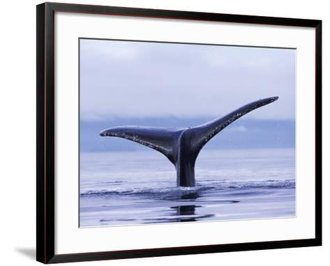 Tail Fin of Humpback Whale Sounding in Frederick Sound-Paul Souders-Framed Art Print