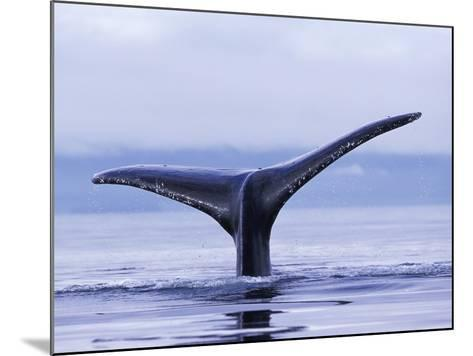Tail Fin of Humpback Whale Sounding in Frederick Sound-Paul Souders-Mounted Photographic Print