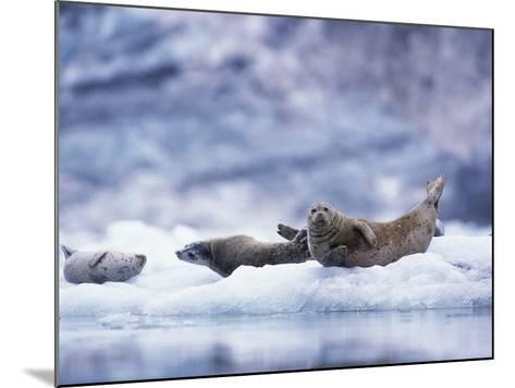 Harbor Seals on Iceberg in Glacier Bay National Park-Paul Souders-Mounted Photographic Print