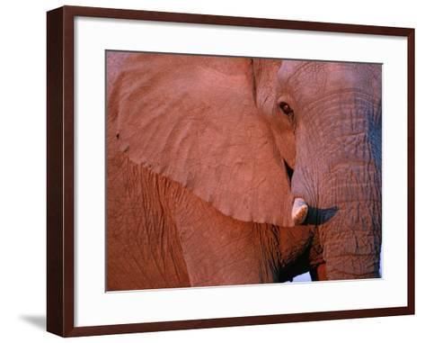 Bull Elephant by Setting Sunlight-Paul Souders-Framed Art Print
