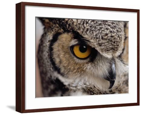 Eye of a Great Horned Owl-W^ Perry Conway-Framed Art Print