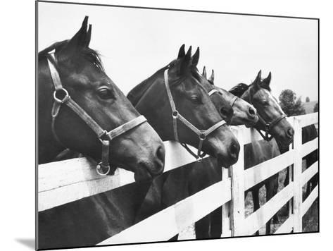 Horses Looking Over Fence at Alfred Vanderbilt's Farm-Jerry Cooke-Mounted Photographic Print