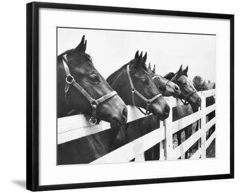 Horses Looking Over Fence at Alfred Vanderbilt's Farm-Jerry Cooke-Framed Art Print