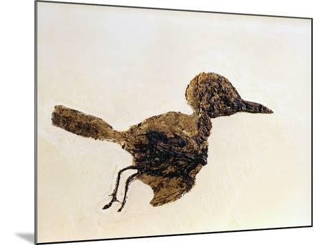 Fossil of Small Bird from Messel Site-Jonathan Blair-Mounted Photographic Print