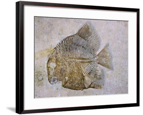 Macromesodon Macropterus Fish Fossil-Naturfoto Honal-Framed Art Print