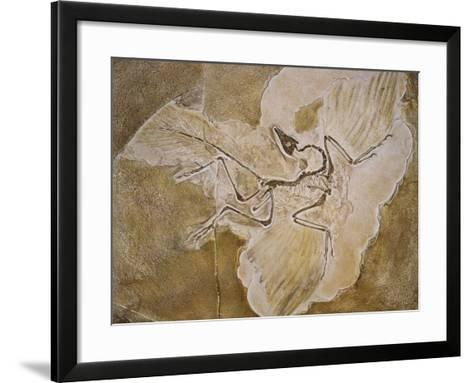Archaeopteryx Lithographica Fossil-Naturfoto Honal-Framed Art Print