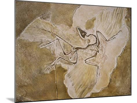 Archaeopteryx Lithographica Fossil-Naturfoto Honal-Mounted Photographic Print