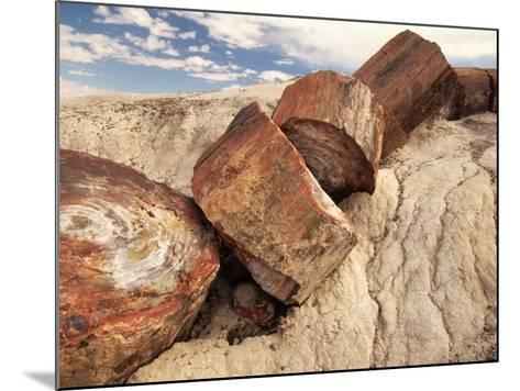Petrified Logs-Joe McDonald-Mounted Photographic Print