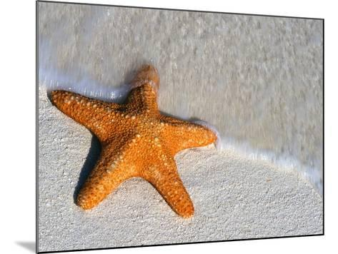 Starfish on Shore--Mounted Photographic Print